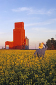 canola field with grain elevator in the background, near, Carey, Canada
