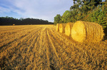 wheat stubble and round straw bales,  Manitoba, Canada