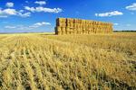 straw bales, wheat stubble,  Manitoba, Canada