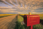 mailbox along country road, canola fields in the background, near Dugald, Manitoba, Canada,