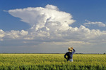 a man looks out over a barley crop and a sky with developing cumulonimbus clouds, Carey, Manitoba, Canada