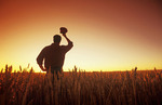 a man looks out over a field of maturing spring wheat at sunset, near Treherne, Manitoba, Canada