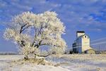 frost coated tree/grain elevator, Dugald, Manitoba, Canada