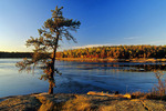 autumn, pine tree, Sturgeon Falls along Winnipeg River, Whiteshell Provincial Park, Manitoba, Canada