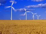 wind turbines in mature wheat field near St. Leon, Manitoba, Canada