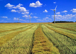 canola swaths/wind turbines, Manitoba, Canada