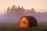 round hay bale, near St. Adolphe, Manitoba, Canada