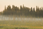 bog, Riding Mountain National Park, Manitoba, Canada