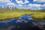 bog near La Loche, Northern Saskatchewan, Canada