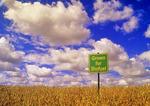 biofuel sign in a maturing harvest ready soybean , near Lorette, Manitoba, Canada