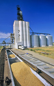 inland grain terminal , Swift Current, Canada