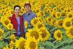 a couple in a sunflower field, near Morris,  Manitoba, Canada