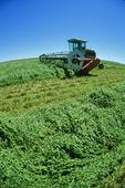 swathing alfalfa, near Ponteix, Saskatchewan, Canada