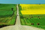 road through farmland, Manitoba, Canada