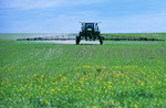 spraying wheat with herbiicide,  Canada