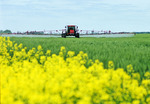 spraying wheat with fungicide, near Oakbank,, Manitoba, Canada