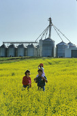 a farmer and his wife and child in a bloom stage canola field, Manitoba, Canada
