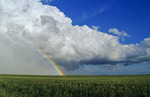 cumulonimbus cloud mass and rainbow with wheat field in the foreground, near Bromhead, Saskatchewan, Canada