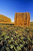 round alfalfa bale, near Winnipeg, Manitoba, Canada