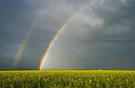 canola field and double rainbow, near Anola, Manitoba, Canada