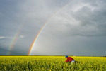 man in early bloom stage canola field, rainbow in the sky, near Anola,  Manitoba, Canada