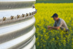 close up of grain storage bin with blooming canola field in the background, near Dugald,  Manitoba, Canada