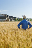 a farmer loos out from his maturing  wheat field to a housing development in the background, Winnipeg, Manitoba, Canada