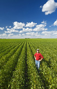 a man in a mid growth soybean field near Winkler, Manitoba, Canada