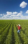 a man in a mid growth soybean field near Winkler, Manitoba, Canada