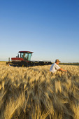 a farmer in front of his swather in a mature harvest ready barley, near Dugald, Manitoba, Canada
