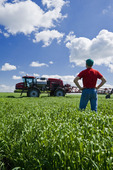 a man scouts a wheat field with a high clearance sprayer for herbicide application waits in the background near Dugald, Manitoba, Canada