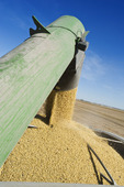 a grain wagon unloads soybeans into a farm truck during the harvest, near Niverville, Manitoba, Canada