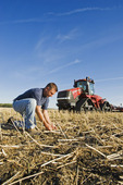 a young farmer examines seed placement, tractor and air till seeder used to plant winter wheat in a zero till canola stubble field in the background, Lorette, Manitoba, Canada