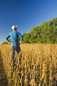 a man in a maturing soybean field with shelterbelt in the background,  near Niverville , Manitoba, Canada