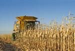 grain corn harvest near Dugald, Manitoba, Canada