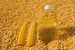 grain corn and  corn oil