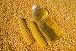 grain corn and  corn oil