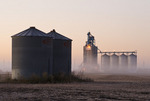 grain storage bins in a harvested soybean field with inland grain terminal in the background, Beausejour, Manitoba, Canada
