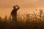 man in a mature soybean field, near Lorette, Manitoba, Canada