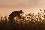 man in a mature soybean field, near Lorette, Manitoba, Canada