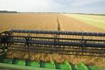 a combine harvester straight cuts canola, Manitoba, Canada