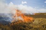 oat stubble burning near St. Agathe, Manitoba, Canada