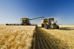 a combine unloads into a grain wagon on the go during the barley harvest, near Dugald,  Manitoba, Canada