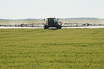 spraying barley with fungicide, near Lorette, Manitoba, Canada