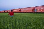 a man looks out over an early growth barley field next to potash hopper rail cars,near Carman, Manitoba
