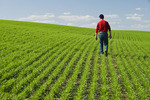 a man scouts an early growth spring wheat field, Tiger Hills,, Manitoba, Canada