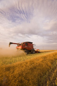 a combine harvester works in a field during the canola harvest, near Dugald, Manitoba, Canada