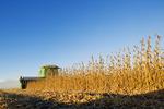 soybean harvest, near Niverville, Manitoba, Canada