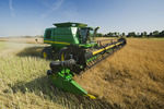 a combine harvester works in a  standing canola field during the harvest, near Niverville, Manitoba, Canada