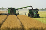 a combine harvests standing canola while augering the crop into a grain wagon, Manitoba, Canada
